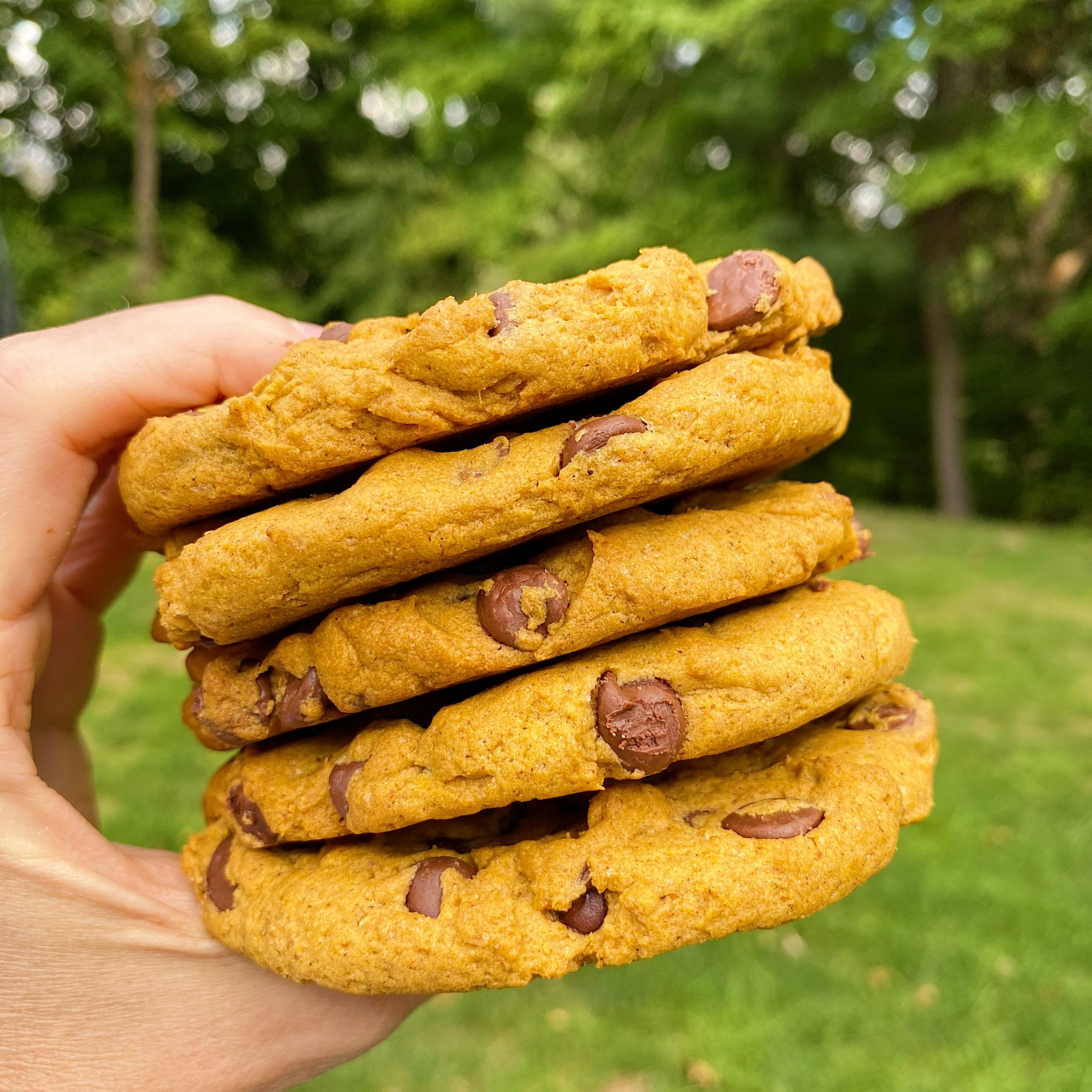 gluten free pumpkin chocolate chip cookies #glutenfree #glutenfreerecipes www.healthygffamily.com