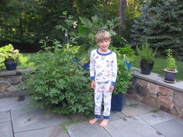 planting a patio garden #glutenfreerecipes www.healthygffamily.com