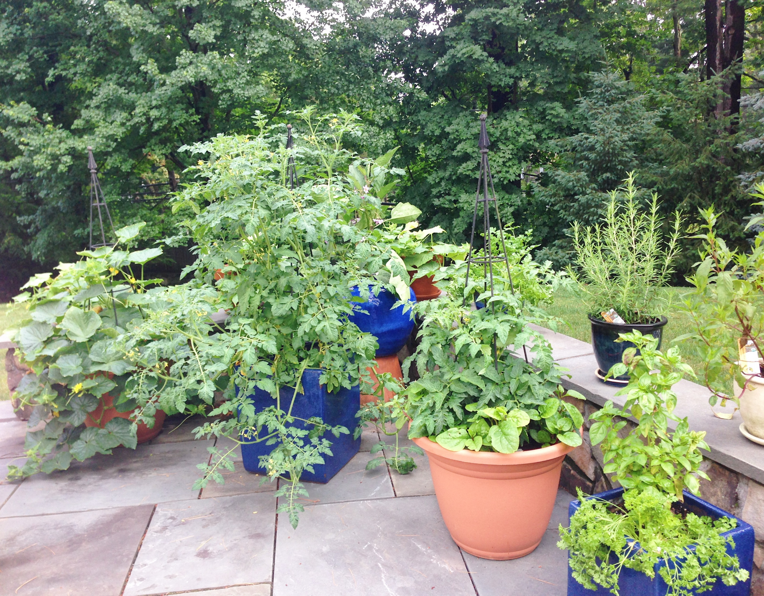 how to plant a patio garden www.healthygffamily.com